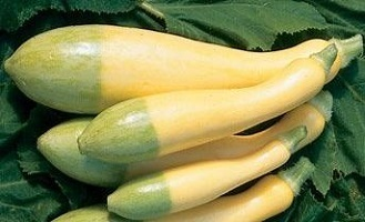 Grow Your Own - Yellow Courgette Zephyr